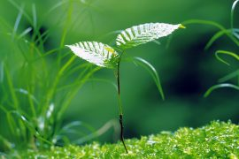 Giải thích câu tục ngữ Ăn quả nhớ kẻ trồng cây