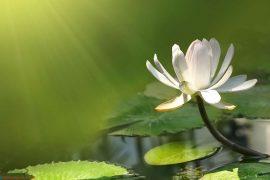 Trình bày suy nghĩ về câu nói: Ta mong với trời cao và biển rộng mà quên rằng hoa từ đất mà ra