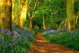 """Suy nghĩ về ý kiến: """"Đừng đi theo lối mòn, hãy băng qua những nơi không có dấu chân người để tạo ra những con đường"""""""