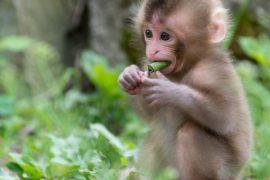 Tả con khỉ mà em có dịp quan sát