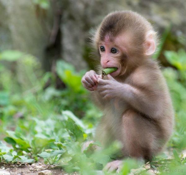 Tả con khỉ em có dịp quan sát