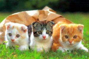 Tả con mèo nhà em