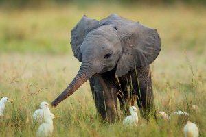 Tả con voi mà em yêu thích