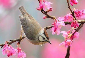 Tả về mùa xuân trên quê hương em