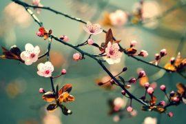 Cảm nghĩ về mùa xuân của em